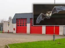 Vleermuizen zitten renovatie van brandweerkazerne in Wilnis in de weg: 'Wachten tot ze uit winterslaap zijn'