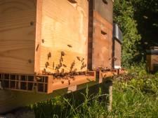 Des ruches connectées sur les toits en province de Liège