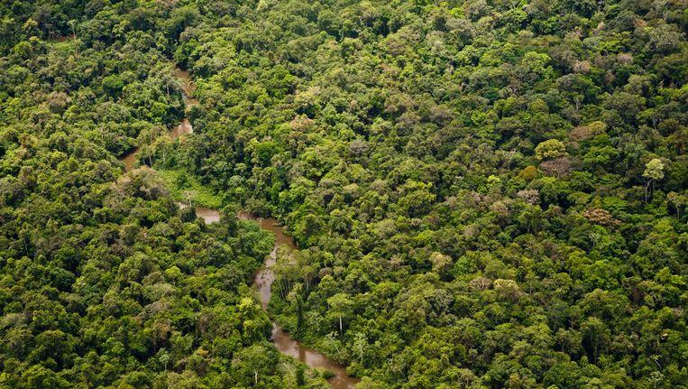 Regenwoud nabij Saul, een dorpje in Frans-Guyana. Beeld ANP
