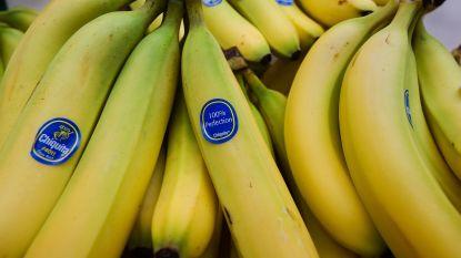 """Kilo """"cocaïne"""" ontdekt in doos bananen voor Delhaize Lochristi"""