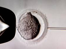 Gezondheidsraad wil verbod op kweekembryo's opheffen