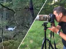 Gemist? Boze bestuurder mishandelt agente in Steenwijk en Frank filmt zeldzaam wit hert in Vaassen