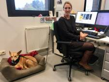 Zes viervoeters tussen 15.000 studenten: HoGent start proefproject met honden op de campussen