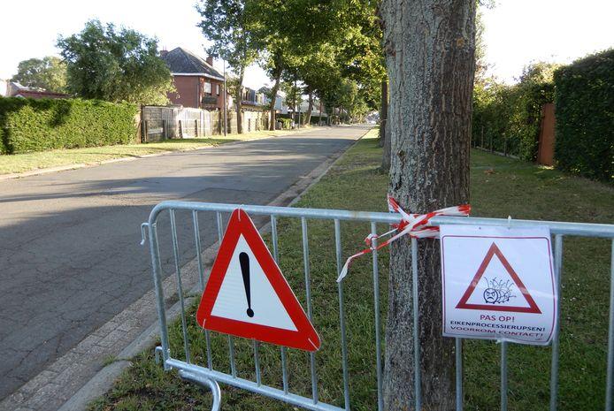 Archiefbeeld van een boom met de eikenprocessierups in Merchtem, ter illustratie.
