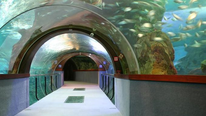 'Vissen' vervangen douaniers op luchthaven Dubai