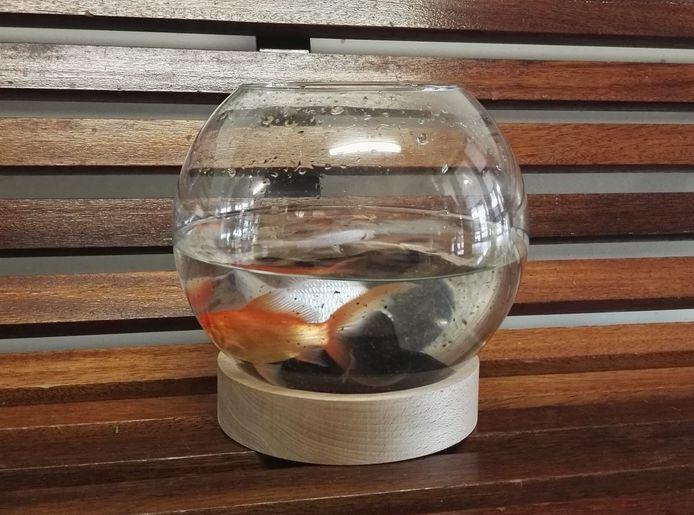 Vier vissen in een kom, achtergelaten in de hal van een flat in Zwolle.