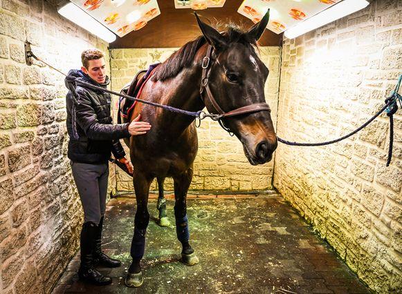 Jos Verlooy met één van zijn paarden.