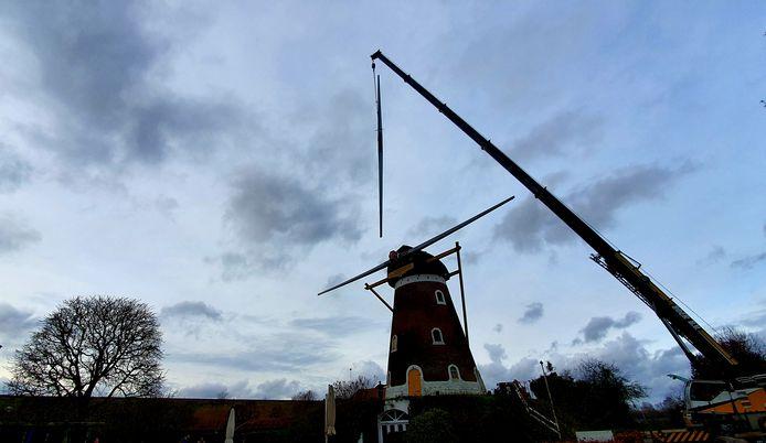 Korenmolen De Hoop in Bavel. Gisteren werden de twee nieuwe roeden aangebracht.