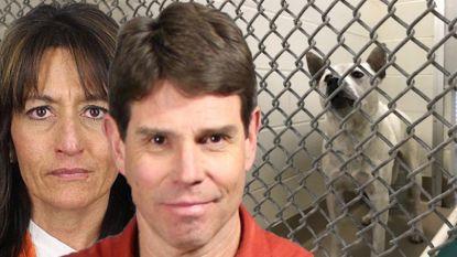 """Hond die misbruikt werd door koppel moet spuitje krijgen. Trauma maakte hem """"zo agressief"""" dat hij """"niet meer te adopteren"""" was"""