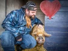 Knuffelen met varkens in Strijen tijdens Valentijn
