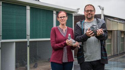 """Drievoudig Belgisch Kampioen Patrick vol ambitie bij start nieuwe duivenseizoen: """"Je duiven graag zien is al lang niet genoeg meer"""""""
