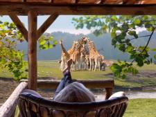 Beekse Bergen bouwt vakantiehuizen tussen wilde dieren