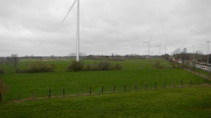 """Oppositie kritisch voor positief advies voor nieuwe windmolen in Stelen: """"Stad negeert eigen omgevingsambtenaar"""""""