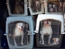 47 verwaarloosde honden uit Hof van Twente maken het goed