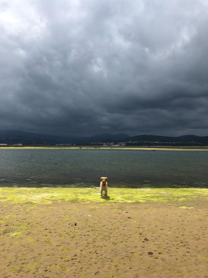 De lucht in de buurt van Santander aan de Spaanse kust betrekt aanzienlijk. Hoe lang zal hond Kyra het nog droog houden daar?