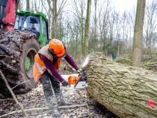 Stichting De Bomenridders legt zich niet neer bij bomenkap langs de Oude Maas