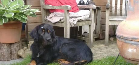 Rechter: Burgemeester Nunspeet mag hond Luna niet herplaatsen
