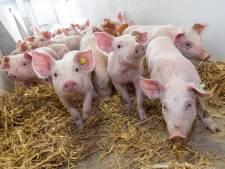 Feitenoorlog tussen activisten en varkensboeren rond registratie varkens