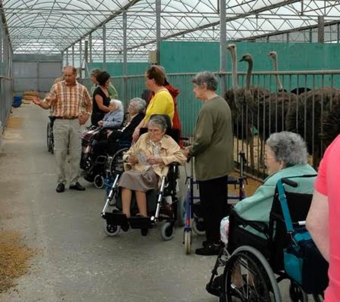 Bart leidt ouderen rond op zijn struisvogelfarm