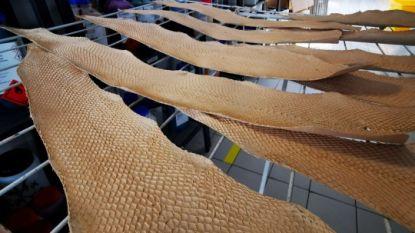 Frans bedrijf tovert zalmhuid om tot leer en redt het zo van de vuilnisbak