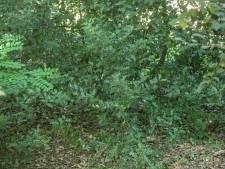 Tweede dassenburcht gevonden in Putten
