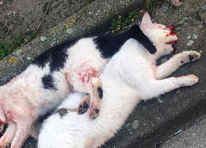 De twee omgebrachte katten.