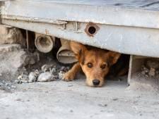 Post van stichting voor dierenhulp verdwijnt spoorloos: 'Kost ons heel veel geld'