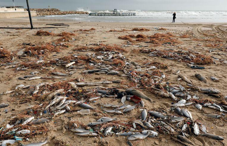 Op een strand in Valencia spoelden heel wat dode vissen aan.