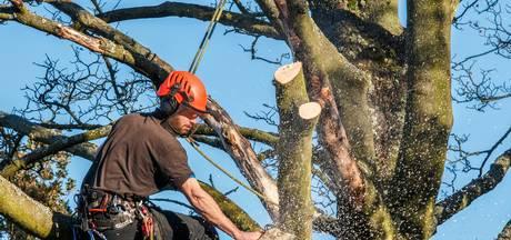 'Te snel bijl in boom'