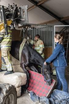 Paard zit klem in deur van zijn stal