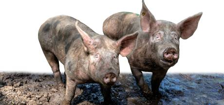 Politiek wil af van strengere geurnorm, 'Waarom veehouders nóg harder aanpakken?'