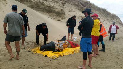 Opnieuw walvissen aangespoeld in Nieuw-Zeeland