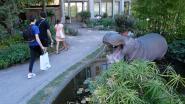 Wild nijlpaard lokt bezoekers naar ZOO