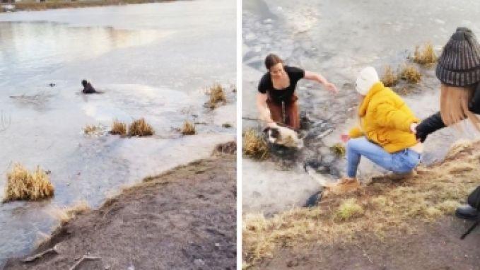 Russische vrouw springt in ijskoud water nadat haar hond door ijs zakt