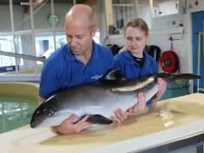 SOS Dolfijn vindt eindelijk nieuwe plek: stichting bouwt opvangcentrum in Anna Paulowna