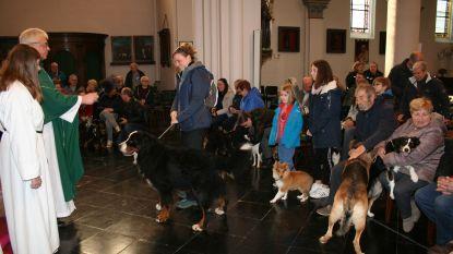 Honden vullen Onze-Lieve-Vrouw Geboortekerk