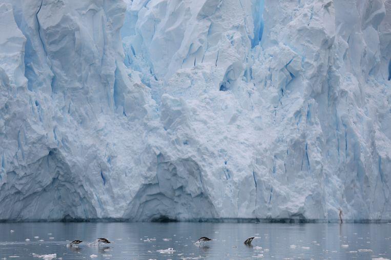 Pinguïns zwemmen voorbij een Antarctische gletsjer.