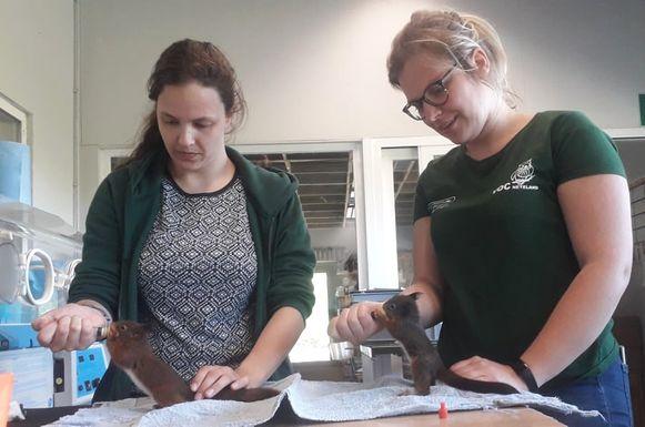 Twee medewerkers van VOC Neteland voederen eekhoorns.