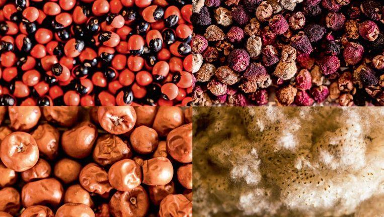 Uiteenlopende zaden uit de zadenkamer van de Hortus Botanicus in Amsterdam. Beeld Jiri Buller