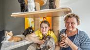"""Kathy's Cathouse opent pop-up springkastelenparadijs en kattencafé: """"Help ons geld inzamelen voor opvang zwerfpoezen"""""""