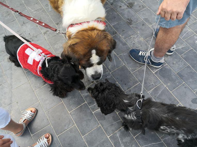 De 50ste Sint-Bernardusfeesten in Nieuwpoort-Bad. Even een onderonsje onder honden