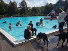 Honden nemen massaal duik in Goffertbad