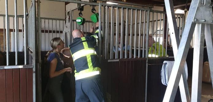 Het paard wordt overeind getakeld.