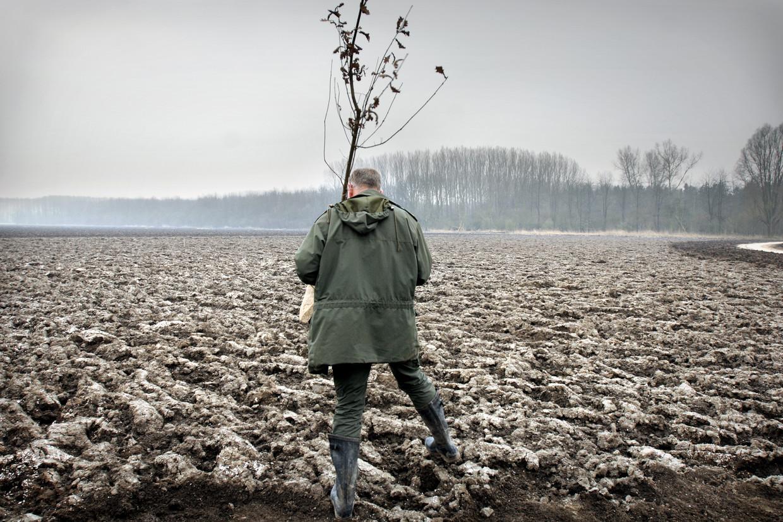 Boswachter plant een jonge boom in de Flevopolder.