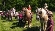 Belgisch trekpaard toont z'n kunnen