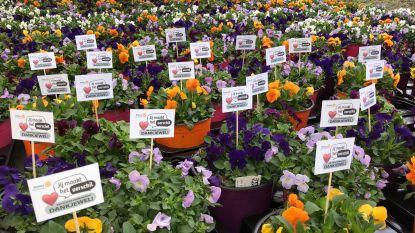 Rotary deelt viooltjes uit aan zorgverleners en ondersteunend personeel