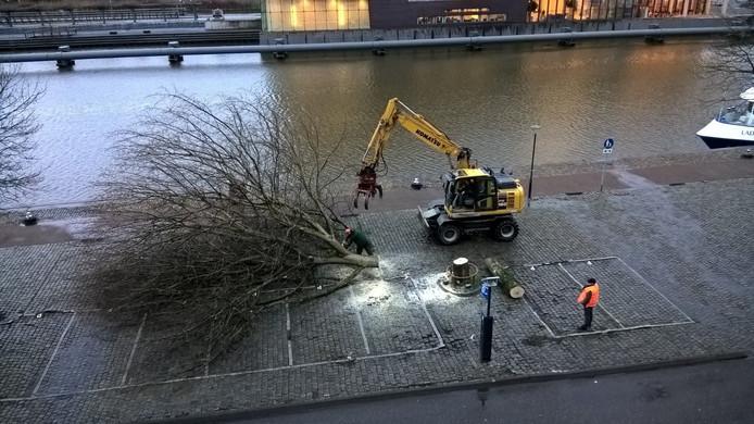 Een der eerste bomen die dinsdag 2 maart 2016 om ongeveer 08.00 uur werden geveld.