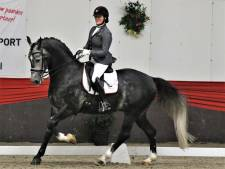 Zeeuws kampioen Thamar Zweistra begint nu aan grote werk met 'bovengemiddeld' paard