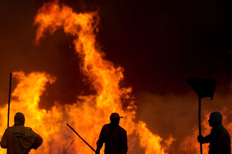 Vooral de bosbranden in de Amazone stonden het afgelopen jaar veel in de belangstelling. Ze zijn sterk verhevigd sinds het versoepelen van milieubeleid door de Braziliaanse president Jaïr Bolsonaro. Beeld EPA