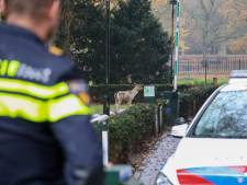 Ontsnapt hert raakt gewond bij achtervolging hond en is afgeschoten, tweede dier gevangen